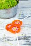Het concept van de lente De bloem van de suikergoedlolly in bloempot met gras Royalty-vrije Stock Foto