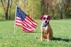 Het concept van de de onafhankelijkheidsdag van de V.S., met hond stock foto's