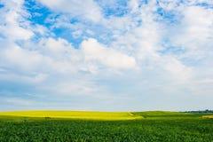 Het concept van de oogst De herfst verlaat grens met diverse groenten op witte achtergrond Zoete maïsgebied onder blauwe hemel, m royalty-vrije stock foto