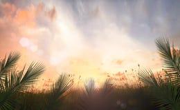 Het concept van de palmzondag Stock Foto