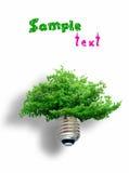 Het concept van Eco: de boom komt uit de gloeilamp voort Stock Foto