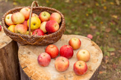 Het concept van het aardfruit Stock Foto's