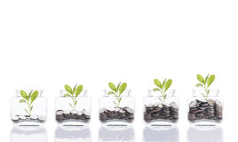 Het concept van het besparingsgeld, bedrijfshand die de stapel van het geldmuntstuk het groeien boom op spaarvarken zetten