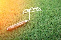 Het concept van het Ecoontwerp met potlood en boomkrabbel Stock Afbeeldingen