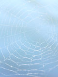 Het concept van het Web Royalty-vrije Stock Fotografie