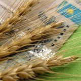 Het concept het veranderen van de prijs van korrel in Kazachstan Close-up Drie aartjes van tarwe liggen op de achtergrond van een royalty-vrije stock foto's