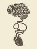 Het conceptuele beeld van hersenen en hart verbond toge Royalty-vrije Stock Afbeelding