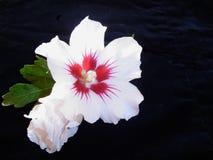 Het contrast van de bloem Stock Afbeeldingen