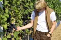 Het controleren van de druiven Royalty-vrije Stock Foto