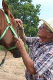 Het controleren van de Ogen van Paarden Royalty-vrije Stock Foto
