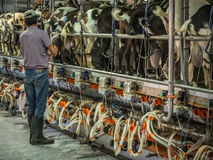 Het controleren van het geautomatiseerde melken stock foto