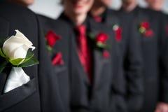 Het corsage van bruidegoms in voorgrond, groomsmen erachter Stock Afbeelding