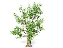 het 3D teruggeven - Durian-boom over een witte achtergrond wordt ge?soleerd die royalty-vrije illustratie