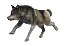het 3D Teruggeven Gray Wolf op Wit Stock Foto