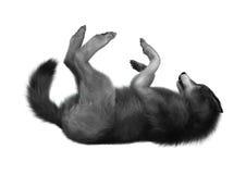 het 3D Teruggeven Gray Wolf op Wit Royalty-vrije Stock Foto
