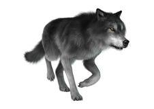 het 3D Teruggeven Gray Wolf op Wit Stock Afbeeldingen