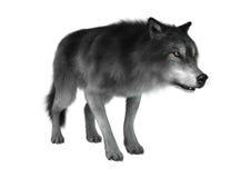 het 3D Teruggeven Gray Wolf op Wit Stock Afbeelding