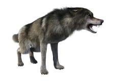 het 3D Teruggeven Gray Wolf op Wit Royalty-vrije Stock Afbeeldingen