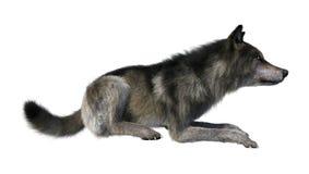 het 3D Teruggeven Gray Wolf op Wit Royalty-vrije Stock Fotografie