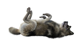 het 3D Teruggeven Gray Wolf op Wit Royalty-vrije Stock Afbeelding