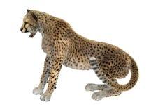 het 3D Teruggeven Grote Cat Cheetah op Wit Stock Afbeelding