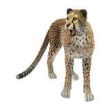 het 3D Teruggeven Grote Cat Cheetah op Wit Royalty-vrije Stock Foto