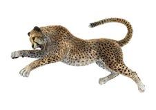 het 3D Teruggeven Grote Cat Cheetah op Wit Stock Foto