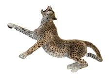 het 3D Teruggeven Grote Cat Cheetah op Wit Stock Foto's