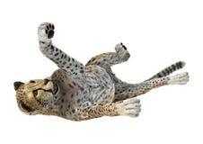 het 3D Teruggeven Grote Cat Cheetah op Wit Stock Afbeeldingen