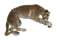 het 3D Teruggeven Grote Cat Cheetah op Wit Royalty-vrije Stock Afbeeldingen