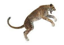 het 3D Teruggeven Grote Cat Cheetah op Wit Royalty-vrije Stock Foto's