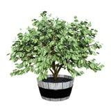 het 3D Teruggeven Homeplant op Wit Royalty-vrije Stock Afbeeldingen