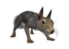 het 3D Teruggeven Oostelijk Grey Squirrel op Wit Royalty-vrije Stock Fotografie