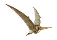 het 3D Teruggeven Pteranodon op Wit Royalty-vrije Stock Foto
