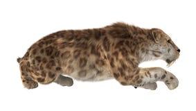 het 3D Teruggeven Saber Tooth Tiger op Wit Royalty-vrije Stock Afbeeldingen