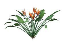 het 3D Teruggeven Strelitzia op Wit Royalty-vrije Stock Foto