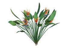 het 3D Teruggeven Strelitzia op Wit Stock Foto
