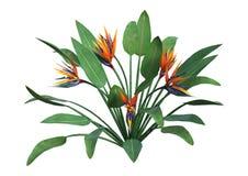 het 3D Teruggeven Strelitzia op Wit Royalty-vrije Stock Afbeelding