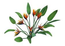 het 3D Teruggeven Strelitzia op Wit Stock Foto's