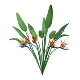 het 3D Teruggeven Strelitzia op Wit Stock Afbeelding