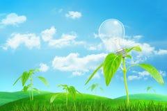 het 3d teruggeven van breed groen gebied onder blauwe hemel met het kleine jonge plant groeien met een lamp als zijn fruit stock afbeeldingen