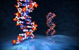 het 3D Teruggeven van DNA-Molecules op Blauwe Oppervlakte Stock Afbeelding