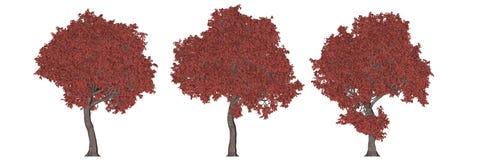 het 3d teruggeven van drie die bomen op wit worden geïsoleerd Stock Fotografie