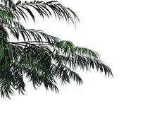 het 3d teruggeven van een tak van de voorgrondboom die op witte backg wordt geïsoleerd Stock Foto's