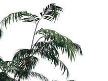 het 3d teruggeven van een tak van de voorgrondboom die op witte backg wordt geïsoleerd Stock Foto