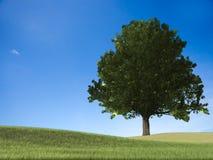 Het 3d teruggeven van Groen gras op een golfgebied Stock Afbeelding
