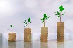 het 3D teruggeven van stapels van muntstuk het groeien bomen Royalty-vrije Stock Foto