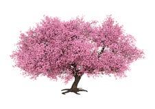 het 3D Teruggevende Roze Bloeien Sakura Tree op Wit stock afbeeldingen