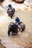 Het dagelijkse bad van de olifant Stock Afbeeldingen