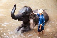 Het dagelijkse bad van de olifant Stock Afbeelding